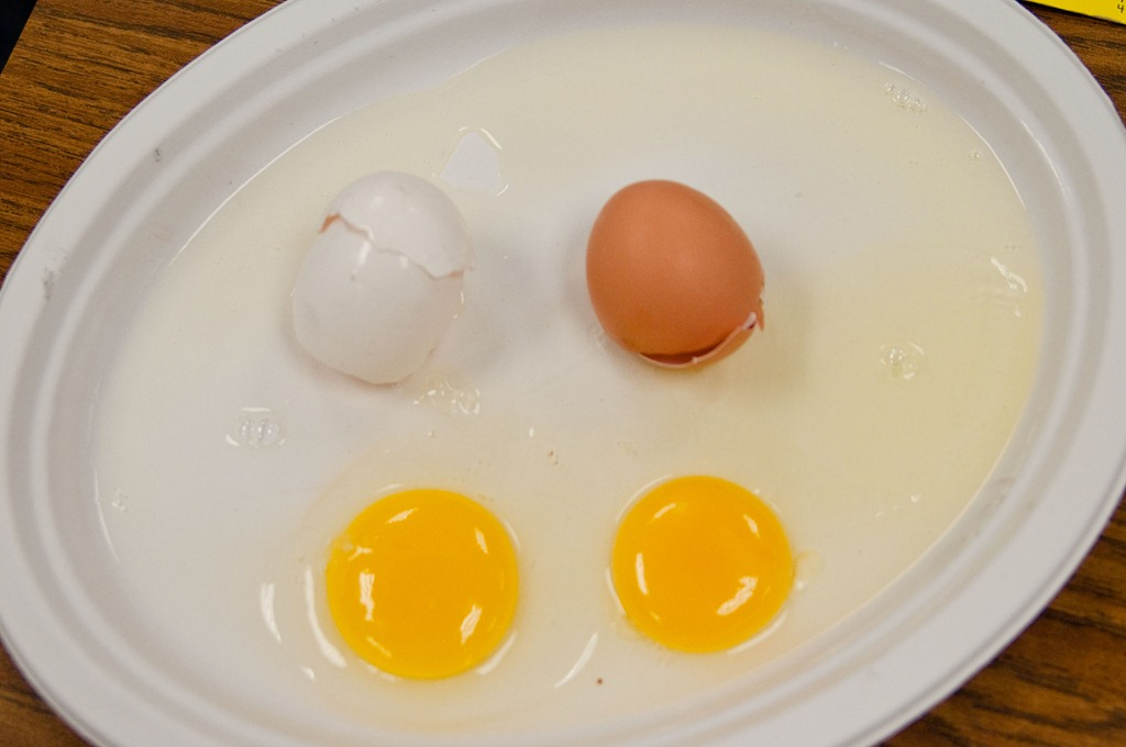 martin-luther-king-day-egg-activity1